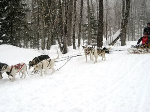 HORSE DRAWN SLEIGH & DOGSLED RIDESEnjoy a single horse drawn Sleigh or cutter ride at Rosey's Trail Rides or Deerhurst Resort. Both farms are 10 minutes from Colonial Bay. Dogsled expeditions at North Ridge Ranch (15 minute drive). 1/2 hour adventures start at $35.